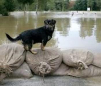 Željko Majstorović: Najveće količine padalina u posljednjih 120 godina