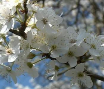 Stiglo je proljeće !