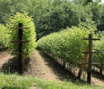 Stručno predavanje o suvremenoj tehnologiji uzgoja malina