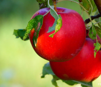 Poljoprivredni proizvođači prijavite se za potpore