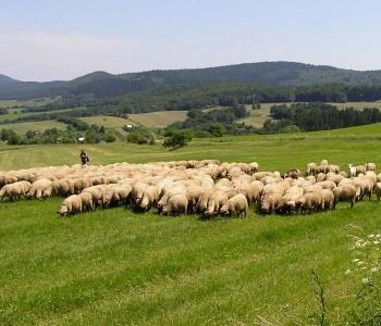 Javni poziv za financijsku pomoć poljoprivredno-prehrambenom sektoru