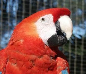 Papiga Pipi Duge Čarape umirovljena u Njemačkoj