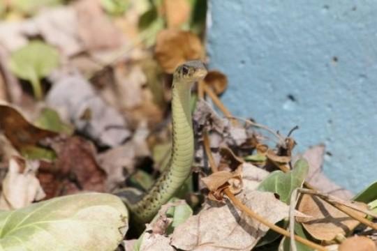 Od ugriza zmije svaki dan u svijetu umre oko 200 osoba