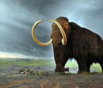 U Beču pronađeni ostaci mamuta
