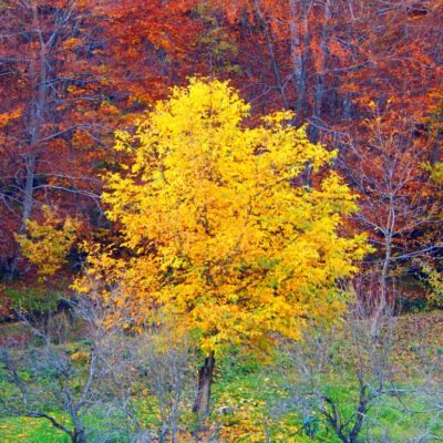 Foto: Boje jeseni