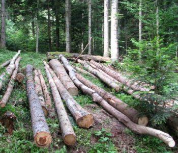 Gospodarenje šumama na hercegbosanski način