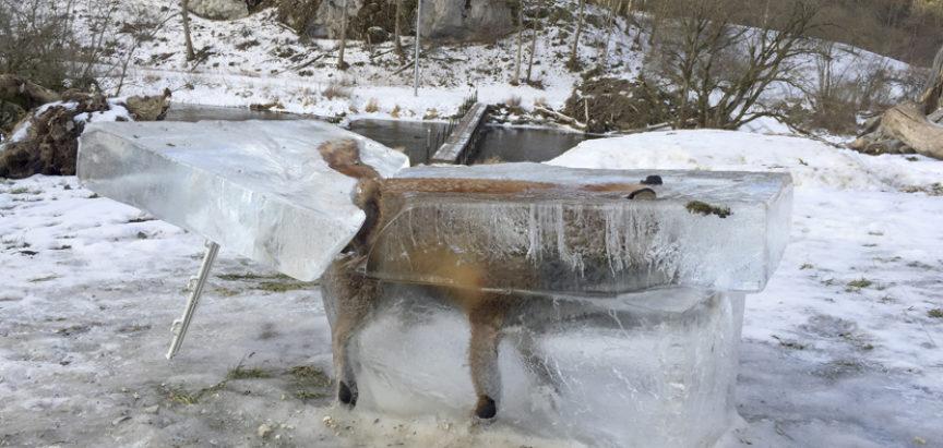 Lisica u kocki leda