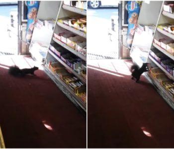 Stalno mu krali čokoladice, vlasnik trgovine ostao iznenađen kad je na snimci otkrio tko je lopov