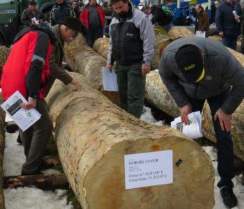 Deblo gorskog javora na licitaciji prodano za skoro 10.000 eura