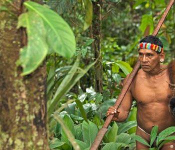 Amazona nije baš tako netaknuta kao što se čini