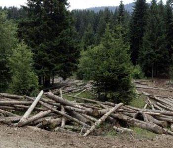 Općina Prozor-Rama aktivno sudjeluje u Javnoj raspravi o Nacrtu zakona o šumama