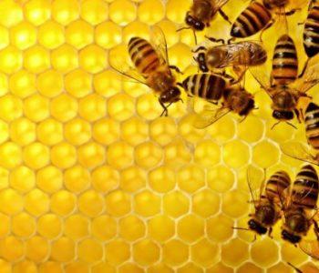 NAJAVA: Stručno predavanje za pčelare