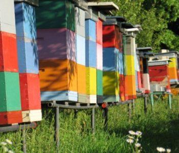 TUZLA: Više od 200 pčelara na okupu