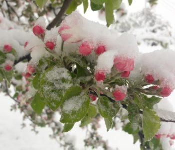 FOTO: Snijeg na behar pade !