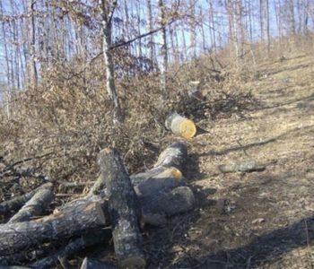 Općina Prozor-Rama neće dozvoliti prodaju i uništavanje šume na području Rame