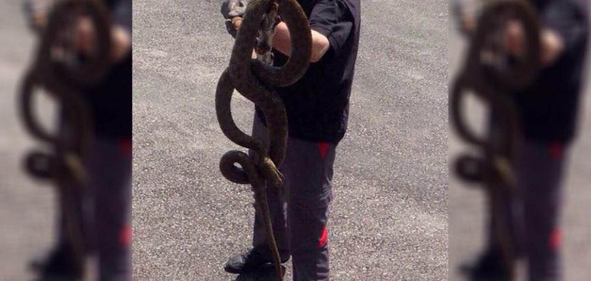 Gornji Vakuf-Uskoplje: Pronašli i ubili zmiju dugu tri metra