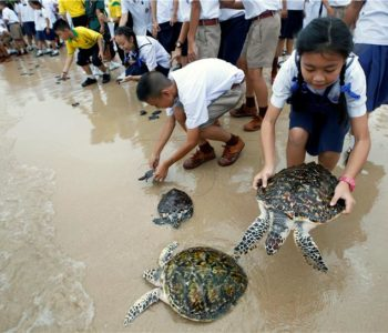 Za kraljev rođendan Tajlanđani pustili u more 1066 kornjača