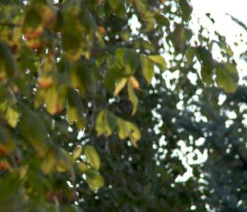 Proglašen narandžasti meteoalarm za Bosnu i Hercegovinu