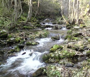 Održana Javna rasprava u vezi izdavanja okolišnog dopuštenja za mini hidroelektranu Volujak