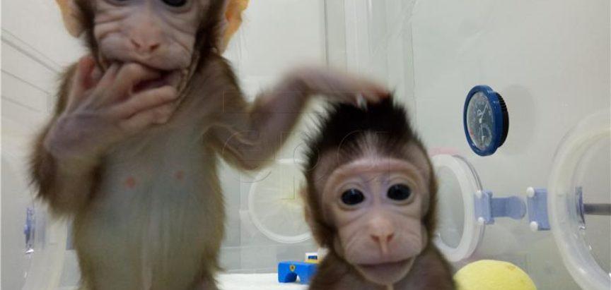 Kineski znanstvenici klonirali majmune i otvorili put kloniranju ljudi