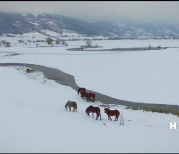 Bajka u bijelom: Pogledajte snimku divljih livanjskih konja iz zraka