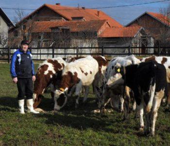 Farmer koji se vratio iz Australije dnevno prodaje i do 450 litara mlijeka