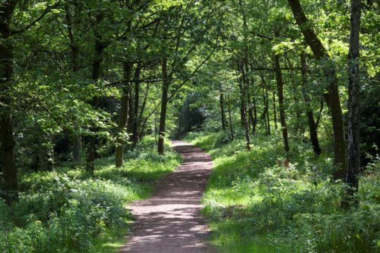 Samo pola sata u šumi smanjit će stres i regulirati krvni tlak