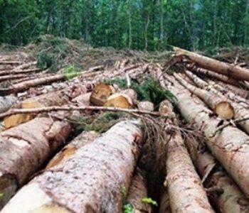 Uskoro zabrana izvoza drvene građe iz BiH
