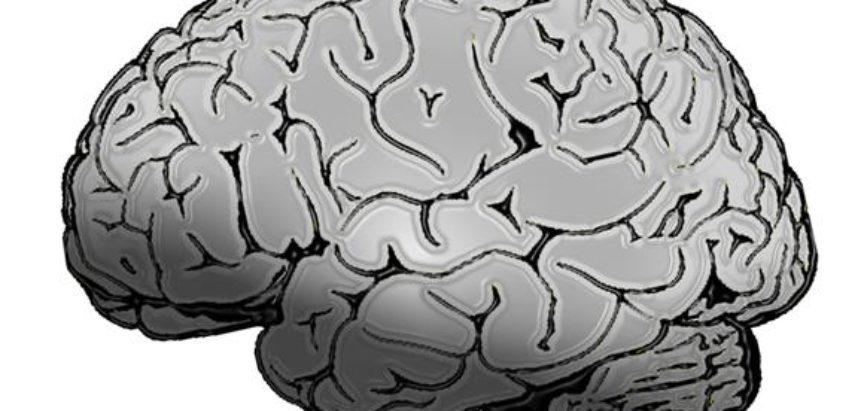 Znanstvenici na životu održali mozak svinje bez tijela