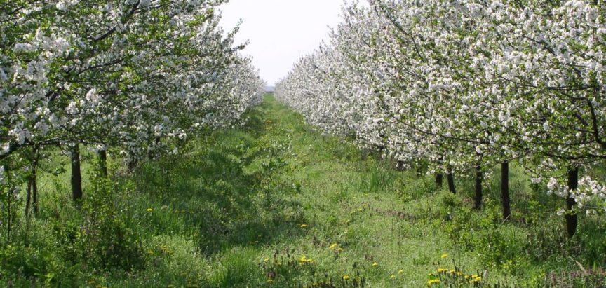 Nitko neće u voćnjak, čak ni za dnevnicu od 80 KM
