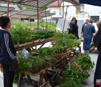 Foto: Na zelenoj tržnici u Prozoru veliki izbor rasada