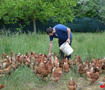 Foto: Radom i upornošću do vlastite farme koka