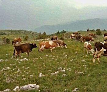Javni poziv za odabir korisnika sredstava za poticaj poljoprivrednoj proizvodnji na području općine Prozor-Rama za 2018. godinu