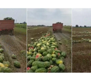 MOJA DOMOVINA Mladić bacio 25 tona lubenice jer ju u svojoj domovini ne može prodati – Gdje pronaći volju za ostanak?
