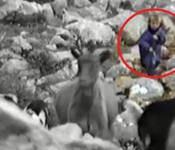 Luka Modrić čuva koze na Velebitu 1990.-tih
