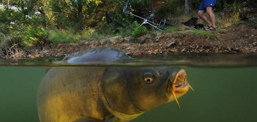 Najava: Prvenstvo SRS FBiH u lovu šarana i amura na Ramskom jezeru