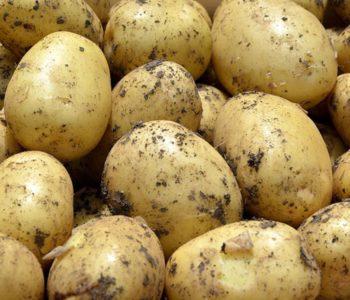 BiH ostaje bez krompira?