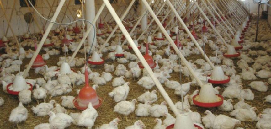 BiH ide na listu zemalja kojima je dozvoljen izvoz piletine u EU