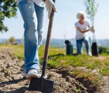 Jesensko pošumljavanje u Tomislavgradu: Posadit će se 120.000 sadnica