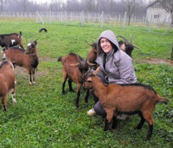 Ne želi napustiti selo –  Mlada Krstina Bojić: Nakon što nije uspjela pronaći posao posvetila se uzgoju alpskih koza