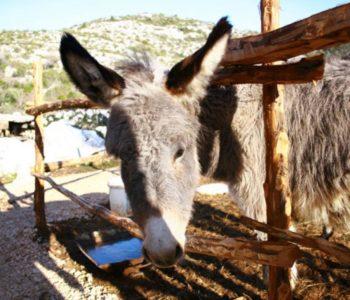 """Krave, magarci, pilići i ostale životinje """"plaćaju TV pretplatu"""""""