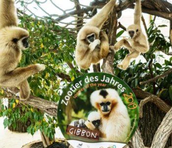 Raspjevani majmuni u zoološkom vrtu