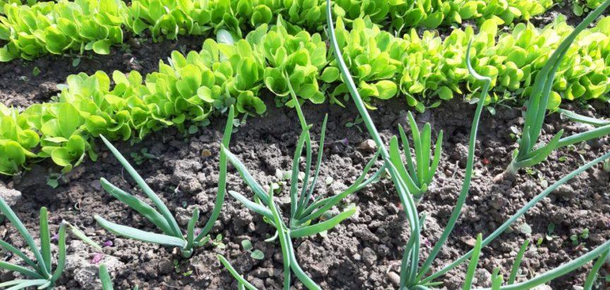 Travanj – mjesec intenzivnih radova u vrtu