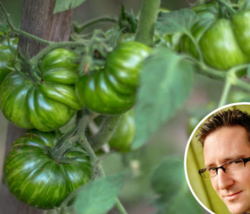 Dražen Karačić isprobao 350, a čuva sjeme 80-ak sorti rajčice