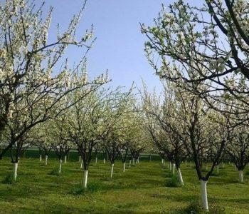 Obavijest poljoprivrednim proizvođačima o Programu utroška sredstava – Poticaj poljoprivrednoj proizvodnji za 2019.godinu