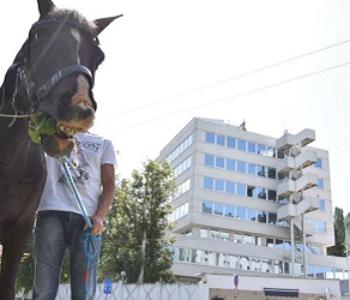 Konj pred OHR-om u Sarajevu