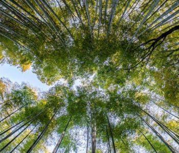 Učenici na Filipinima moraju posaditi stabala kako bi završili školu