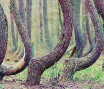 Misteriozno selo sa šumom iskrivljenih stabala koja rastu u obliku slova J