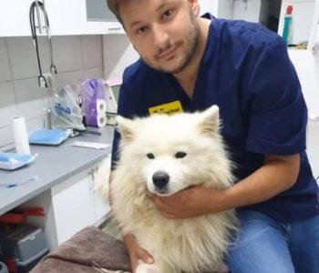 Obavijest: Veterinarska stanica Sema-vet d.o.o. Prozor-Rama provodi besplatnu sterilizaciju vaslničkih i napuštenih pasa