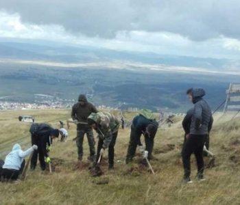 Kupreški učenici zasadili 4 000 sadnica bijeloga i crnog bora i smreke